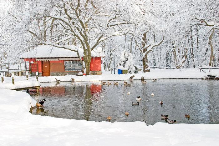 Φυσικές ομορφιές: Άλσος Αγίου Νικολάου στη Νάουσα - Λίμνη ψαρέματος [3,5km]